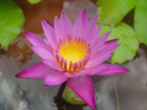 500 マミヤォ7番花 Dsc03352.jpg